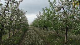 Яблоки из Донецкой области покупают за границей