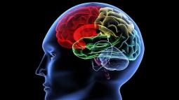 В человеческом мозге ложная информация со временем может стать «правдивой»