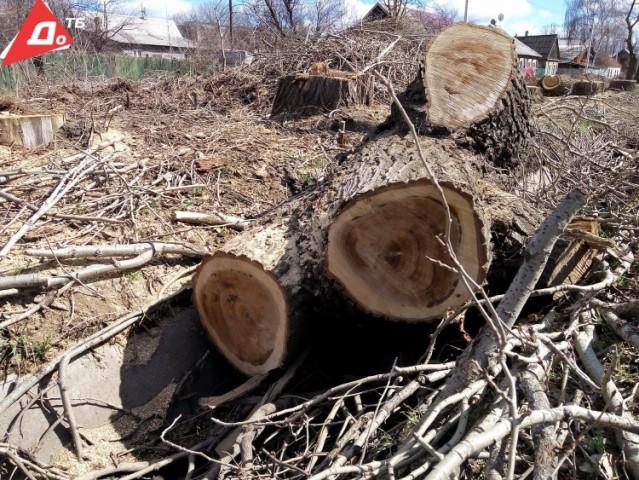 В Константиновке планируют срезать две тысячи деревьев