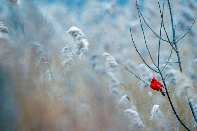 Синоптик: 5 февраля ожидается похолодание до - 9 градусов