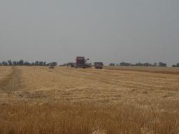 В Константиновском районе ждут хорошего урожая