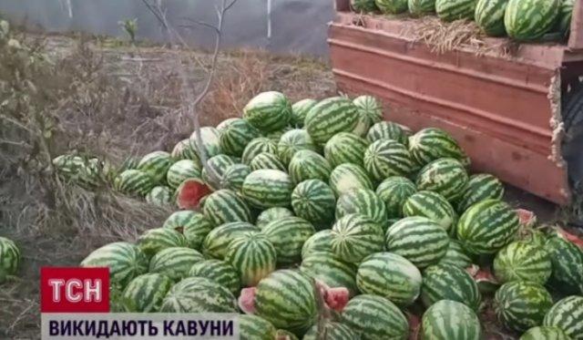 На Херсонщине фермеры массово избавляются от арбузов (ФОТО, ВИДЕО)
