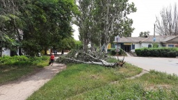 В Константиновке ураган валил деревья и обрывал провода