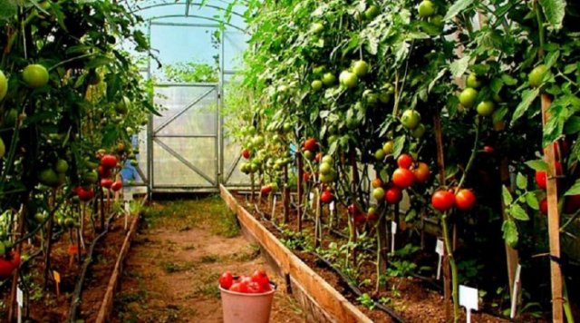 В случае подорожания газа в Украине будет меньше тепличных овощей - СМИ